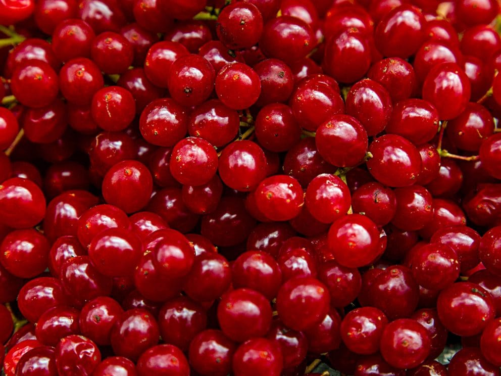 Kiril Mischeff Product Cranberry