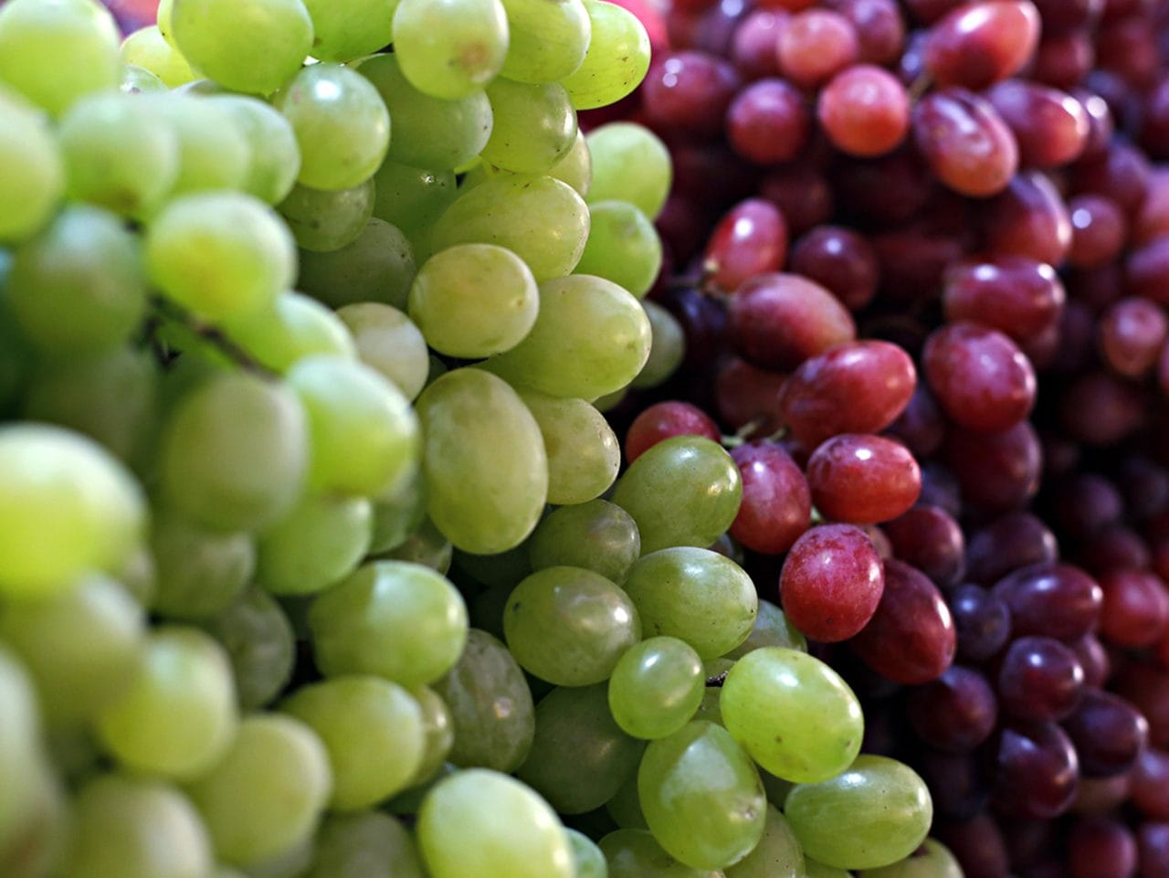 Kiril Mischeff Product Grapes