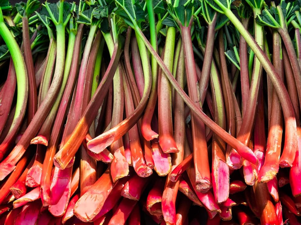 Kiril Mischeff Product Rhubarb