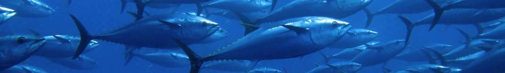 Product Tuna